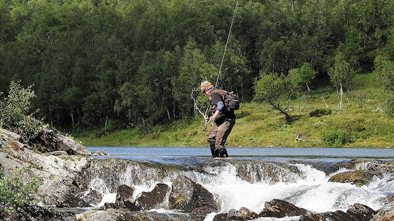Flugfiskare går vid fors