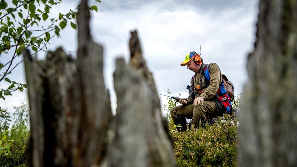 En jägare med gröna kläder och orangea hörselskydd sitter i skogen. I förgrunden syns en suddig stubbe.