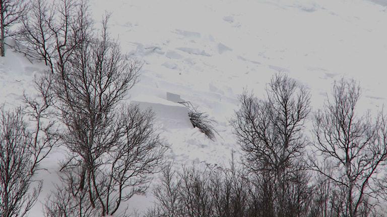 Lavinen på Hamrafjället den 6 februari 2012 var nära 200 meter bred och 100 meter lång. Brottkanten var cirka 1 meter.Foto: Destination Funäsfjällen AB