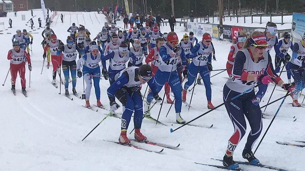 Många längdskidåkare i spåret under en tävling i Åsarna