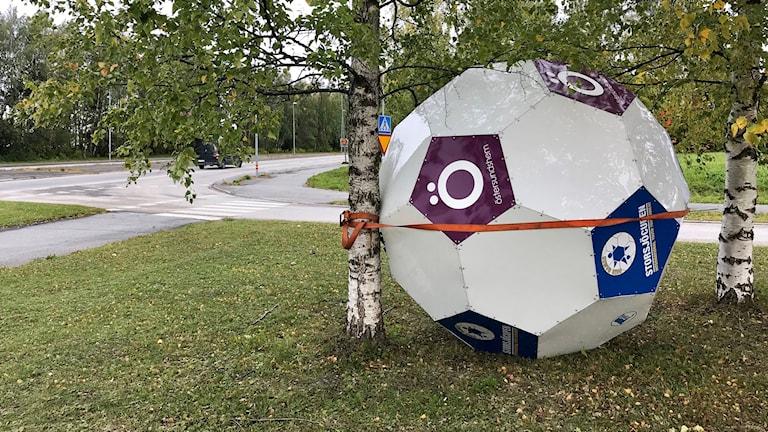 En stor boll som surrats fast vid ett träd. Foto: Pernilla Anth Jacobsson/Sveriges Radio