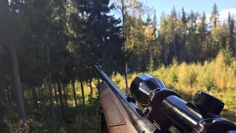 Närbild gevärspipa i skogsmiljö