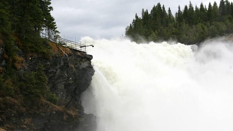 Tännforsen. Höga flöden 2013. Foto: Tännforsens turiststation.