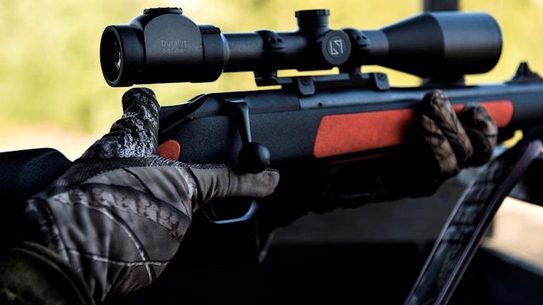 gevär, jakt