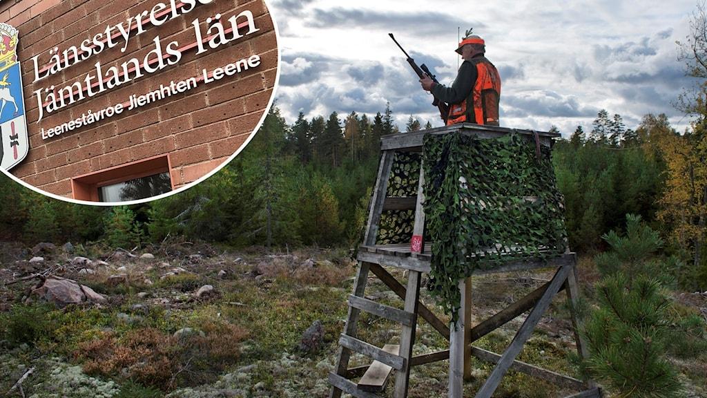 En man som står på pass på älgjakt, inklippt i bilden är länsstyrelsen i Jämtlands logga.