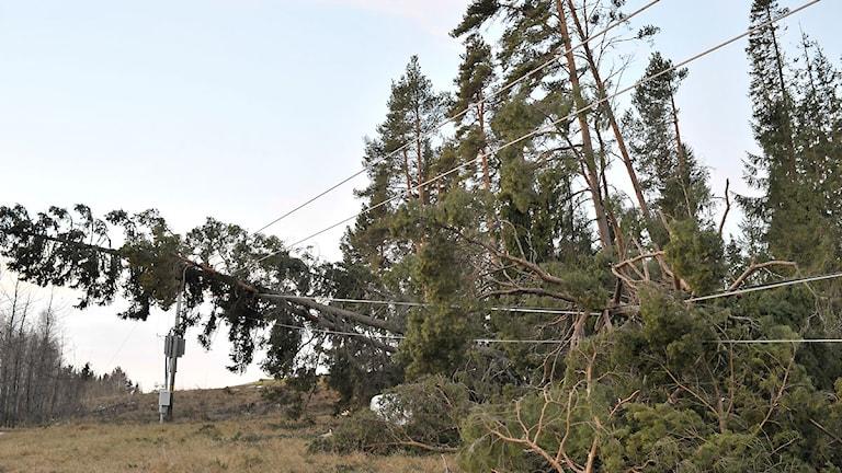 Nedfallna träd och elledningar i Ångsta, söder om Östersund efter stormen Ivar. Foto: Tommy Andersson/TT.