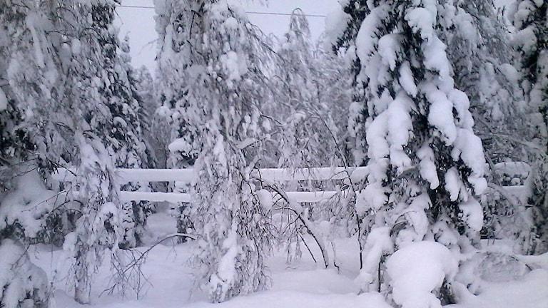 Nedtyngda elledningar i Norråkerområdet, där snö frusit fast på ledningarna. Foto: E.ON.