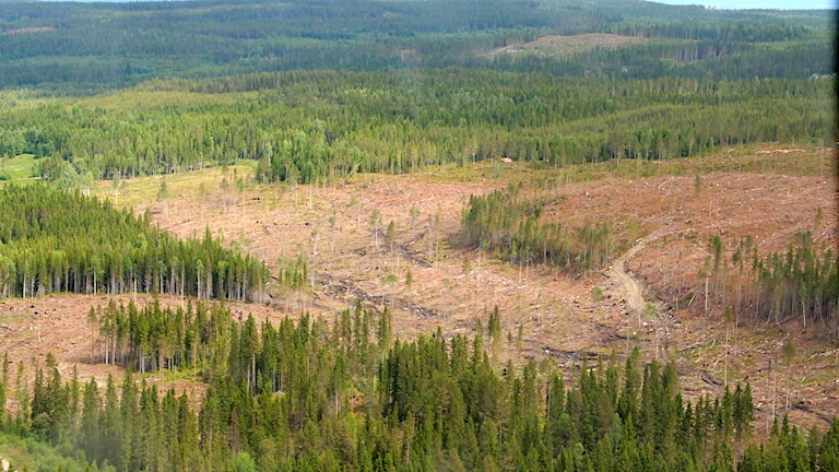 Stormfälld skog efter stormen Ivar. Framtiden kan innebära fler stormar som får namn.