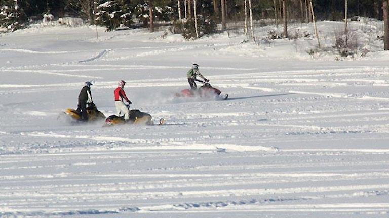 Skoteråkare. Foto: Ingrid Eriksson.