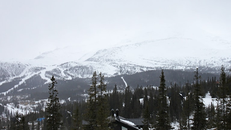 Fjällstopp med snö och granar i mulet väder