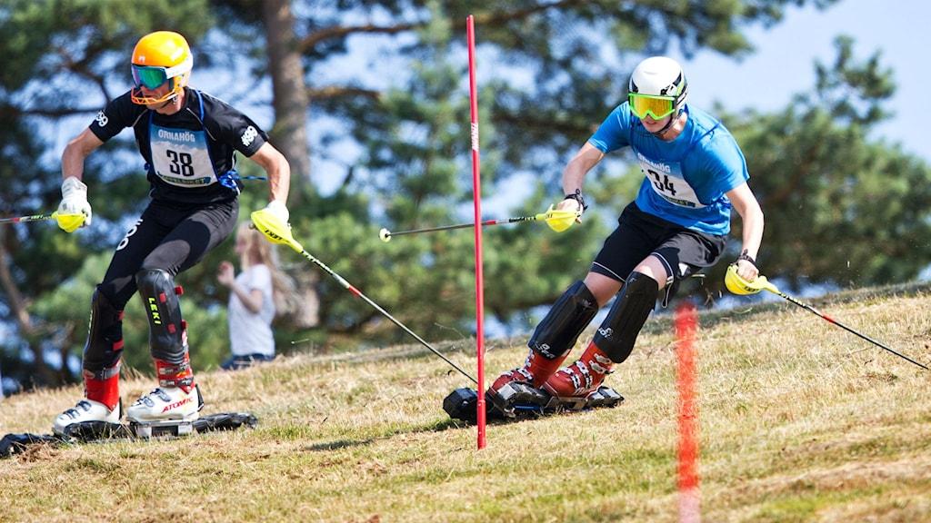 SM i grässlalom i Brösarp. Foto: Anderas Hillergren