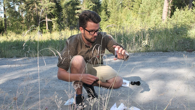 Magnus Hansson vid svenska jägarförbundet visar hur man tar ett prov ur en hög med björnskit.