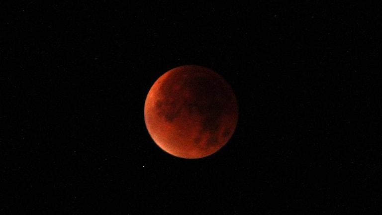 همزمانی اَبرماه و ماه گرفتگی.Foto: Lotta Löfgren/Sveriges Radio.