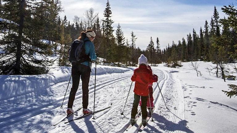 En vuxen och två barn åker längdskidor