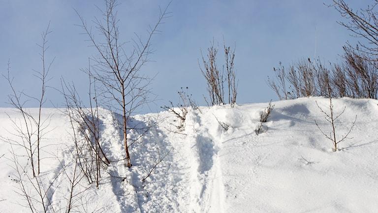 Skoterspår - snöskoter - vinter - snö