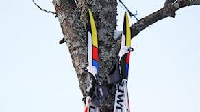 Längdskidor och stavar lutar mot ett träd