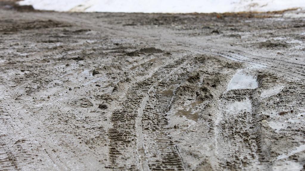 Bilspår på lerig grusväg vid tjällossning
