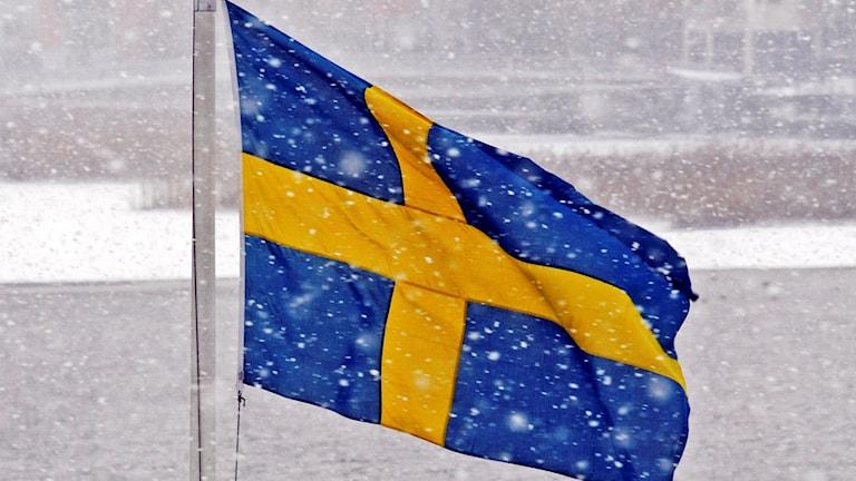 Gratis Utdelning Av Svenska Flaggan P4 Jämtland Sveriges Radio