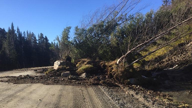 Rasmassor med jord och träd över en landsväg.