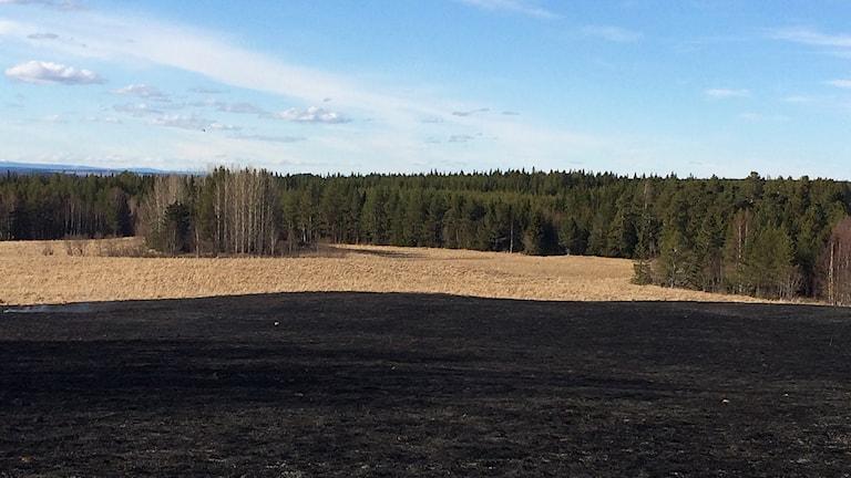 Åkermark som utsatts för gräsbrand