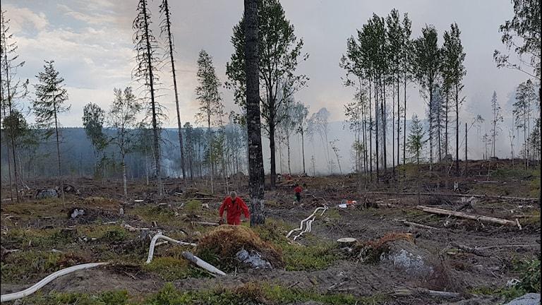 Skogsbrand, rök, slang, personal