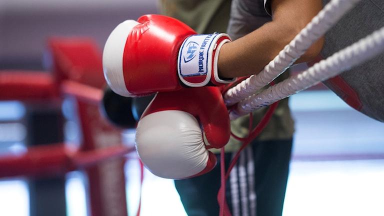 Boxningshandskar i boxningsring.
