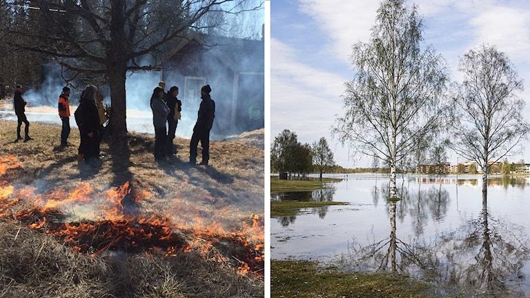 gräsbrand höga vattenflöden