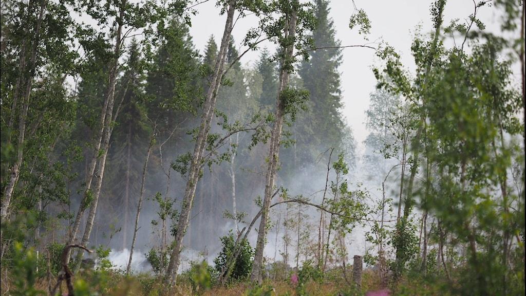 Skogsbrand Gällö