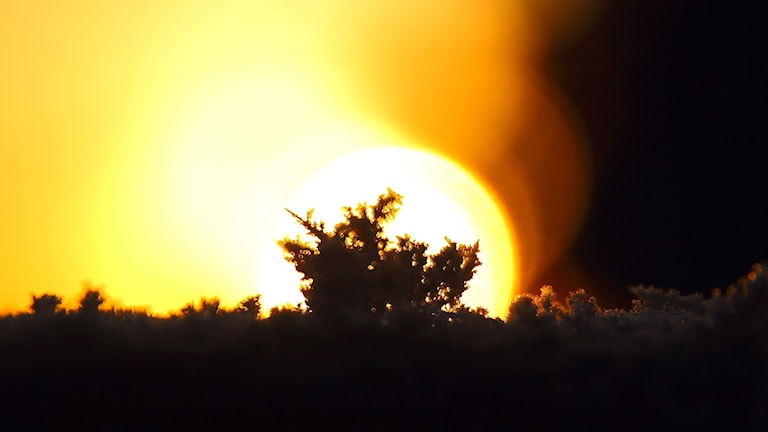 Snökristaller i solsken