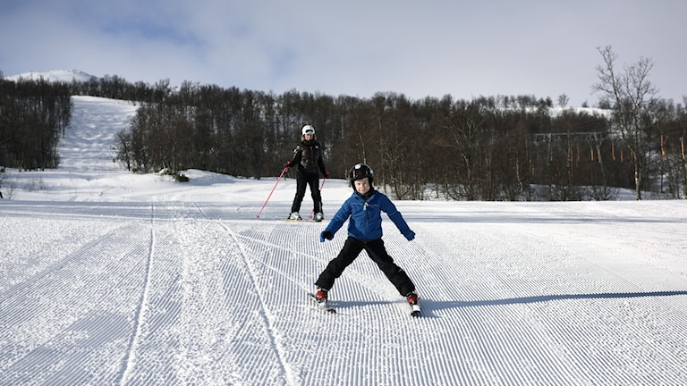 Pojke plogar med skidorna i nypistad slalombacke omgiven av fjällbjörkskog