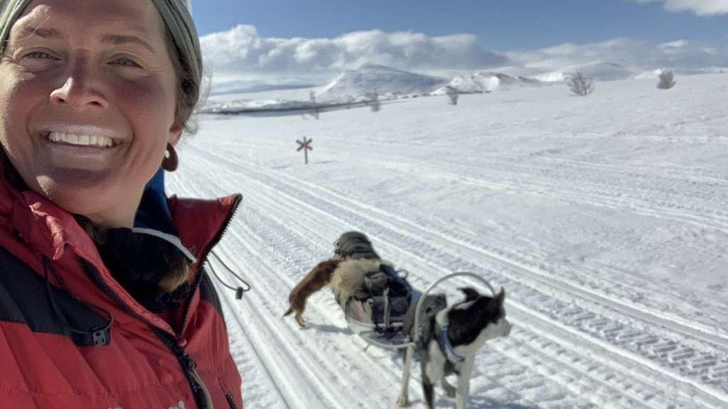 Kvinna tillsammans med hundar och släde i snöklädd fjällmiljö