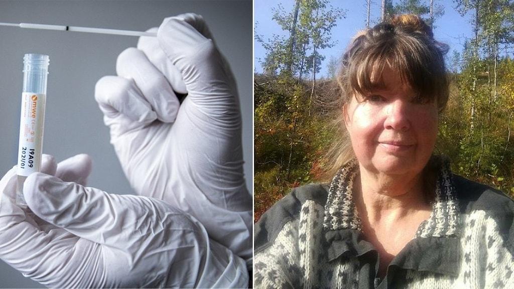 En hand i vit plasthandske håller upp en vit provpinne för covid-19 test. Det är också en kvinna på bilden klädd i en gråvit tröja samt med brunt hår i en knut på huvudet.