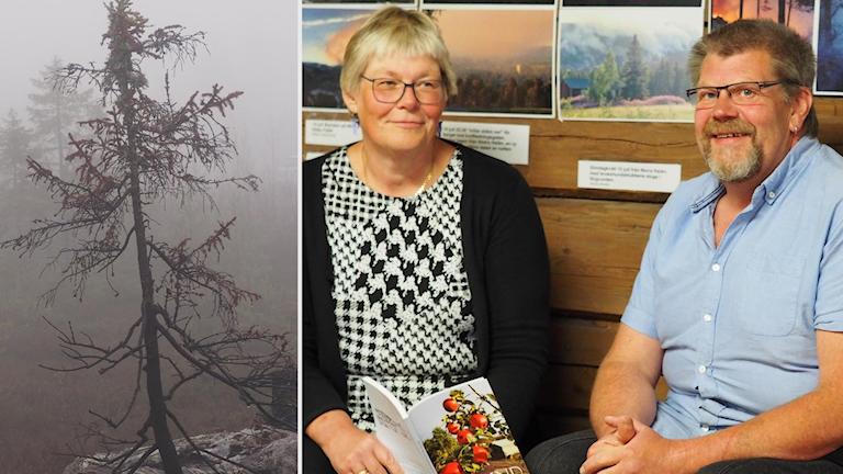 brandskadad skog och man och kvinna på en bänk