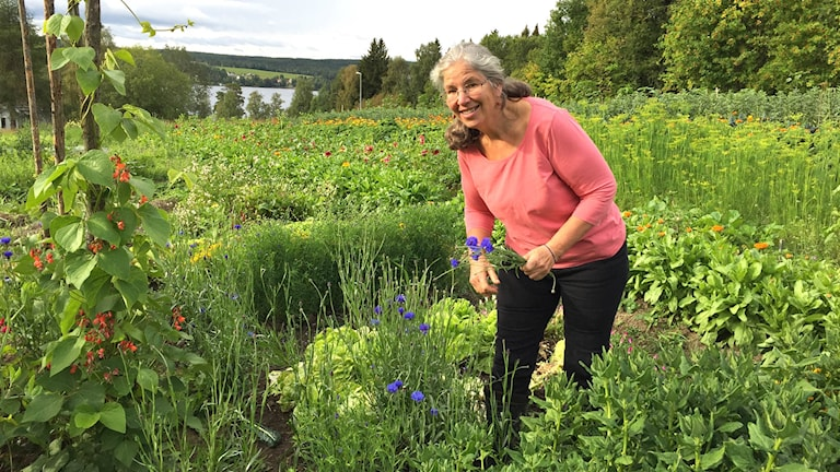 En kvinna plockar blommor i ett stort trädgårdsland
