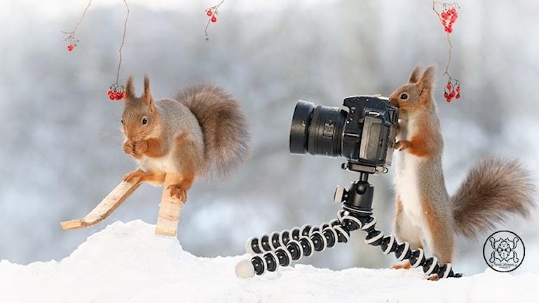 Ekorre på skidor, kamera