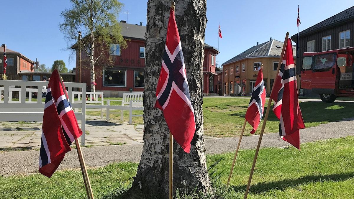 Norska flaggor runt en björk i stadsmiljö