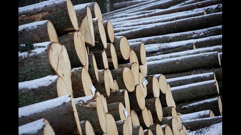 Avverkade stockar i väntan på vidare transport till sågverk.