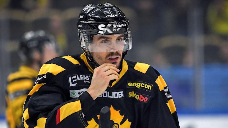 Manlig ishockeyspelare i Skellefteå AIK:s svart-gula matchdräkt