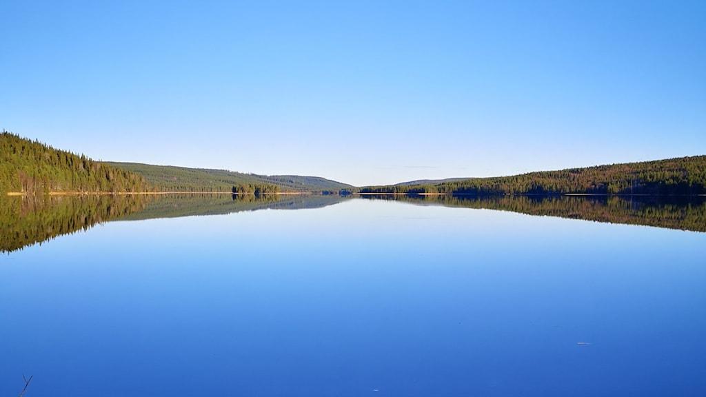 Skogslandskap vid sjö.