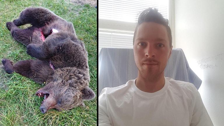 Kollage, till vänster en död björnhona mot gräset, till höger en gladlynt man i vit tröja på ett sjukhus