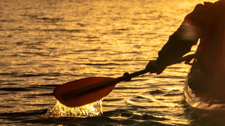 Arm håller kajakpaddel strax över vattenyta