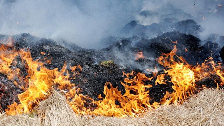 gräsbrand, eld, brand