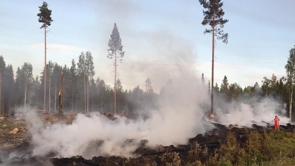 Skog som brinner och brandman som släcker.