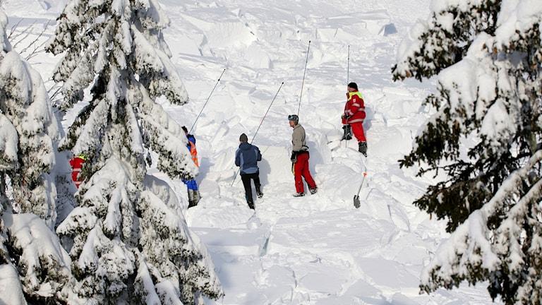 Genomsökning av lavinområde. Foto: Geir Olsen/NTB