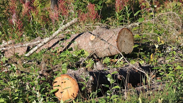 Hög med sågade timmerstockar i skog