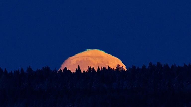 Orangeröd måne går upp över skog