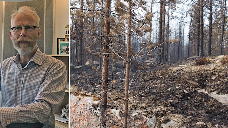 Man med glasögon. En skogsbrandsdrabbad mark.