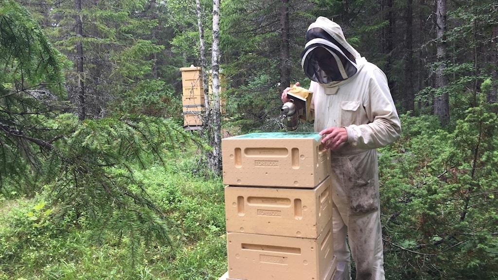 Man bland bikupor