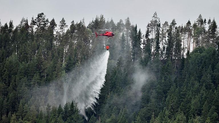 En helikopter samlar vatten i sjön Grötingen för att bekämpa skogsbranden på Grötingenberget i Bräcke kommun, Jämtland