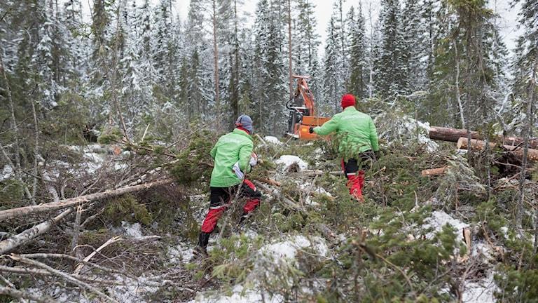 Två personer i Greenpeace-jackor springer mot skogsmaskin vid avverkning